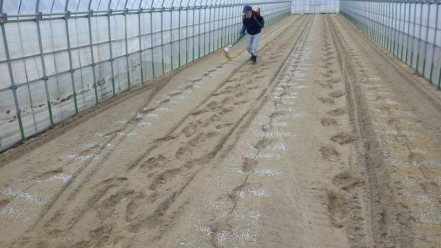 畝肥に良質窒素源「菜種粕」を導入